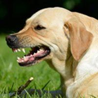 chien agressif comportementaliste vienne 86